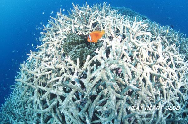 地球の海フォトコンテスト2010  環境部門 準グランプリ 「サンゴの要塞」 広瀬 晴夫 ニコンF4 AFフィッシュアイニッコール16㍉F2,8D  ネクサスF4PRO  YS-50×2灯 f8 1/60秒 プロビア100F  石垣島 -10㍍