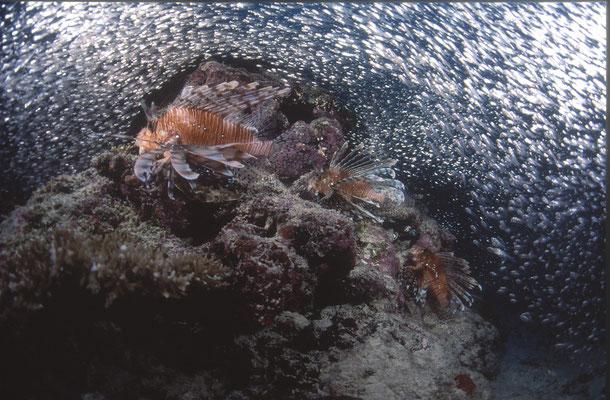 地球の海フォトコンテスト2003  自由部門 入選 「海に降る雪」 広瀬 晴夫 ニコンF4 16mmフィッシュアイ   ネクサスF4PRO  f5.6 1/60 YS-50×2 RVP 水深30m  撮影地:石垣島大崎