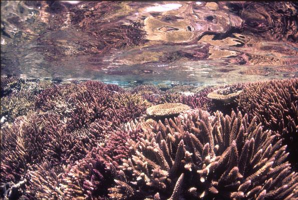 地球の海フォトコンテスト2017  ネイチャー環境部門 入選 「白化前」 広瀬 晴夫  ニコンF4 AFフィッシュアイニッコール16㍉F2,8D  ネクサスF4PRO  自然光 f8 1/60秒 RVP  石垣島 水面下