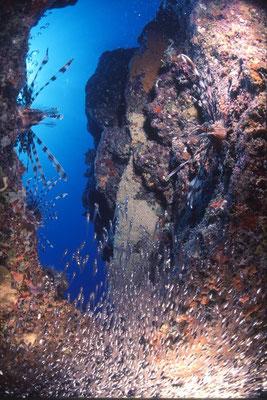 地球の海フォトコンテスト2015  地球環境部門 入選 「捕食」 広瀬 晴夫  ニコンF4 16mmフィッシュアイ   水深25m  撮影地:石垣島