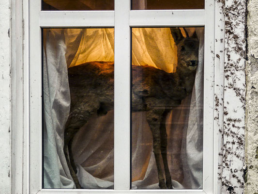 Fenster Ahrensburg fenster website fotoclub ahrensburg