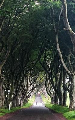 Dark Hedges Irland Ireland Ballymoney