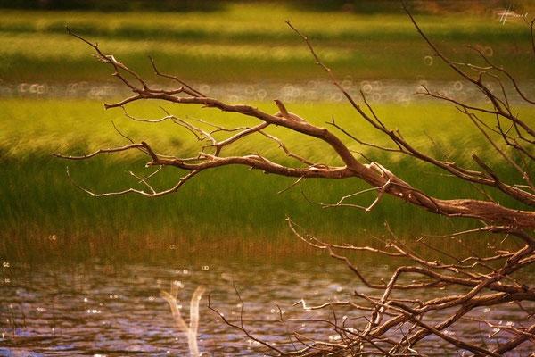 Lac des Sagnes