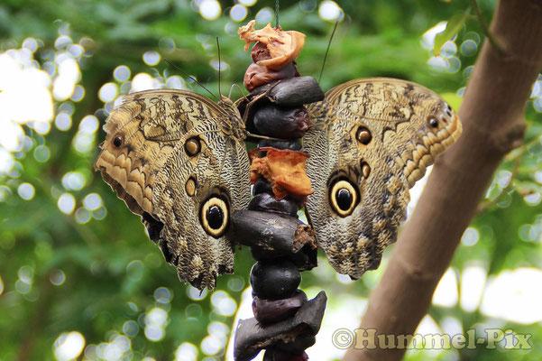 ...und hunderte tropische Schmetterlinge!
