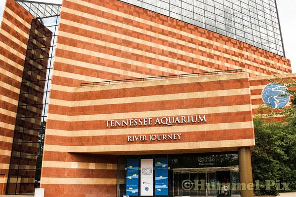 Tennessee-Aquarium - absolut sehenswert!