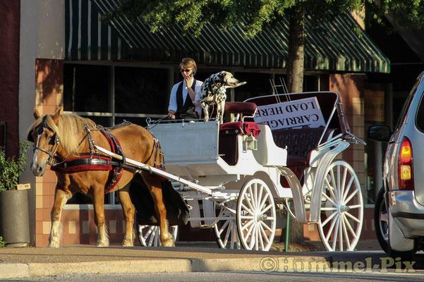 Pferdekutschen sind den ganzen Tag in Chattanooga unterwegs...