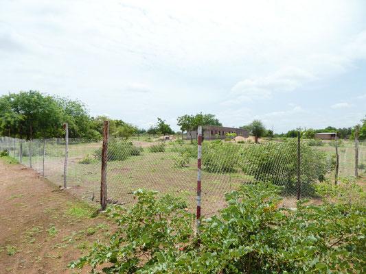 CEG Piela - die Bäume werden durch einen Maschendrahtzaun geschützt