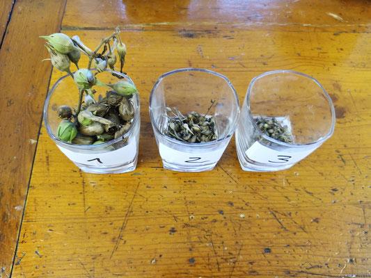 Dezember 2020 – Die Samen wurden nach Pflanzkästen sortiert.