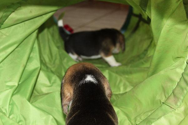 Cox im grünen Tunnel