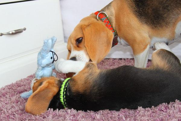 Rahya hat Bruno einen kleinen Spielhasen mitgebracht