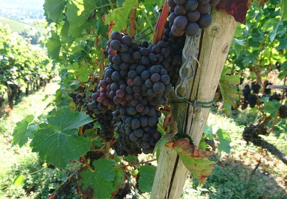 """Typisch für die Ahr-Region """"leckerer Rotwein"""""""