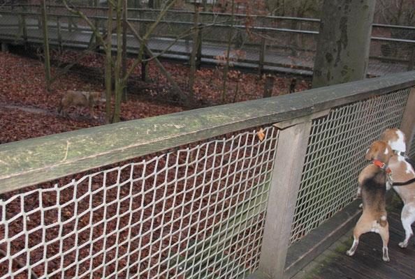 Im Tierpark Bielefeld wurden sich die Wölfe genau angeguckt