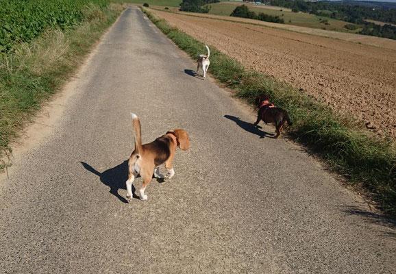 - upps, das ist aber ein komischer Beagle ?!?