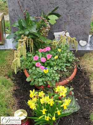 Grabschale mit Stiefmütterchen, rosa Bellis, Märzenbecher