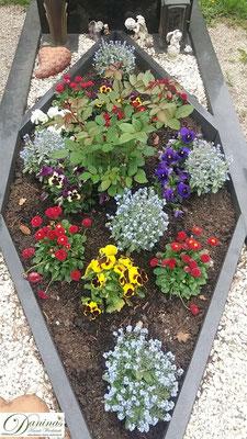 Grabbepflanzung mit Bellis, Stiefmütterchen und Rose