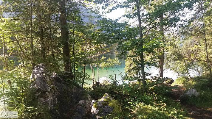 Wald mit See