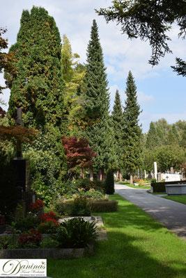 Wunderschöne alte Nadel- und Laubbäume am Salzburger Kommunalfriedhof vermitteln dem Besucher immer neue Eindrücke.