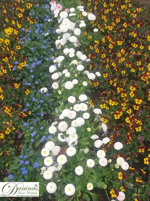 Grabbepflanzung Frühjahr mit Stiefmütterchen, Vergissmeinnicht und weißen Bellis
