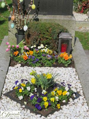 Grabgestaltung Frühjahr mit Kies und bunten Stiefmütterchen