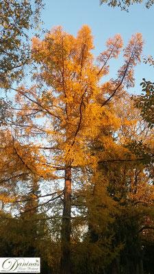 Rund 1800 alte Bäume am Salzburger Kommunalfriedhof schenken Frieden und Kraft.