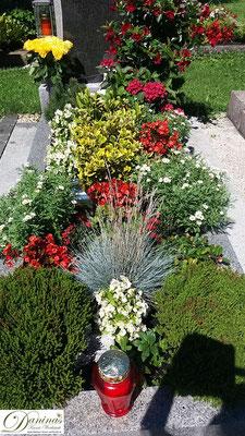 Idee Grabbepflanzung im Sommer - Margeriten, rote Begonien und Gräser