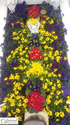 Grabbepflanzung Frühling mit bunten Primeln sowie gelben und violetten Stiefmütterchen