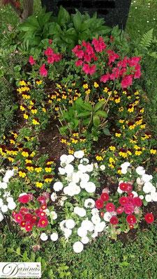 Grabbepflanzung mit gelb-violetten Stiefmütterchen sowie weißen und roten Bellis