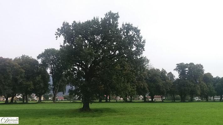 Salzburg, Hellbrunner Allee.