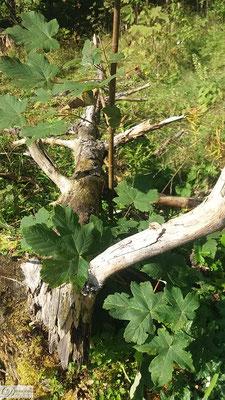 Toter Baumstamm im Zauberwald