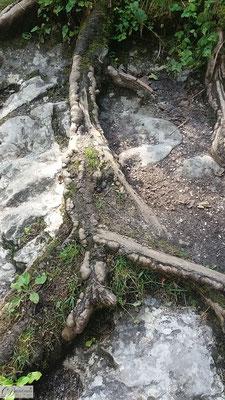 Wurzel auf Felsen