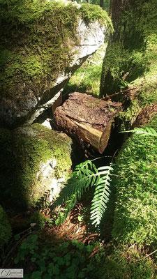 Felsen und Baumstamm mit Moos und Farn