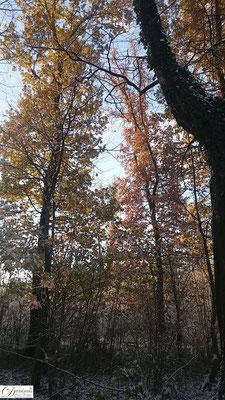 Herbst von seiner kalten Seite - mit erstem Schnee und glitzernden Eiskristallen