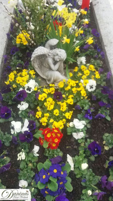 Grabbepflanzung Frühling mit bunten Primeln, Stiefmütterchen und Märzenbecher