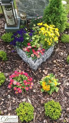 Wunderschöne Grabgestaltung Frühjahr mit Stiefmütterchen,  roten Bellis und gelber Primel