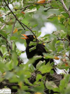 Artensterben bei den Vögeln verhindern, einen Naturgarten gestalten