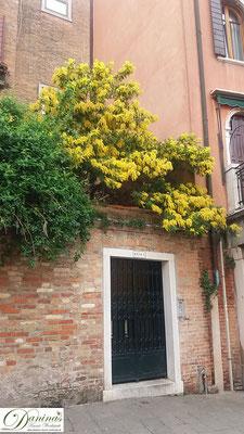 Venedig Dorsoduro