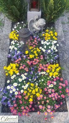 Grabbepflanzung mit bunten Stiefmütterchen sowie rosa und weißen Bellis
