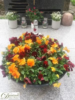 Grabschale Frühjahr mit roten und orangen Stiefmütterchen