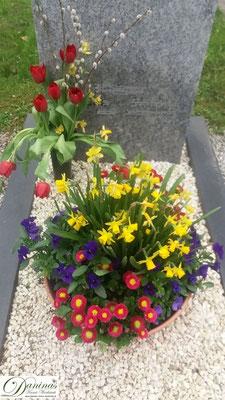 Grabschale mit roten Bellis, lila Stiefmütterchen und Märzenbecher für den Frühling