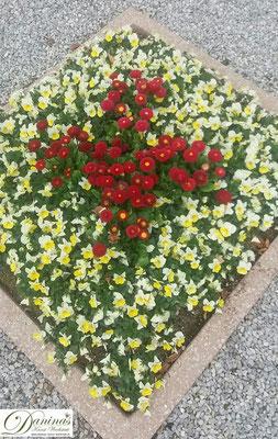 Grabbepflanzung Frühling mit gelben Siefmütterchen, roten Bellis und Steinen