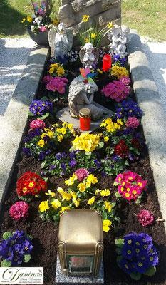 Grabbepflanzung Frühling mit bunten Primeln und Stiefmütterchen