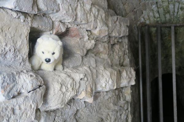 In Ancona in Italien versteckt sich Ole vor dem Gefängnis