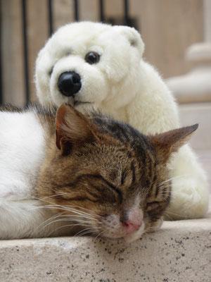 Ole mit schlafender Katze in Dubrovnik