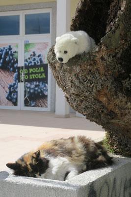 In Dubrovnik in Kroatien hat Ole eine bisschen Angst vor der Katze