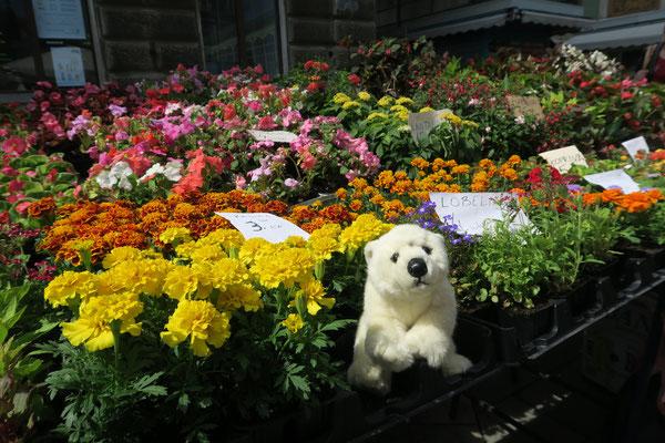 Der Blumenmarkt in Rijeka ist auch schön.