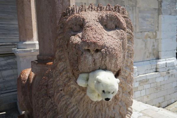 Fast wird Ole in Ancona vom Löwen gefressen.