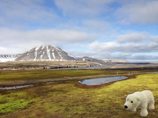 In Ny-Alesund auf Spitzbergen könnte Ole auf Verwandte treffen