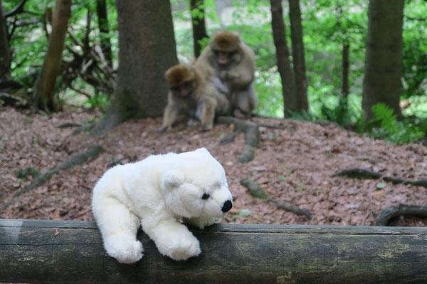 Ole besucht den Affenfelsen in Salem am Bodensee