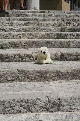 Ole ist genug Treppen in Ancona gelaufen und bleibt einfach auf den Stufen sitzen.