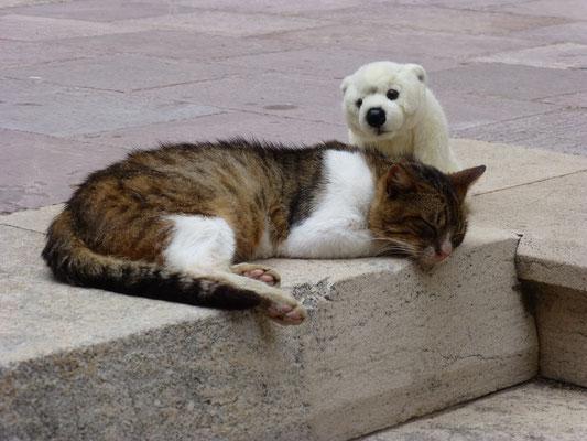 Vorsichtig beschnuppert Ole die schlafende Katze.